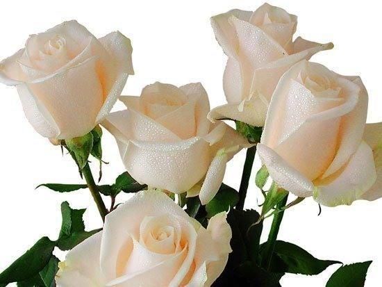 Открытки белые розы анимационные открытки